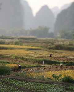 Farm Workers, Yang Shuo, China