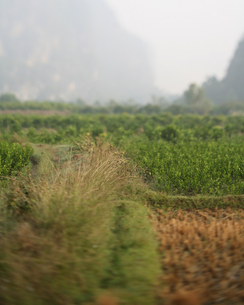Fields, Yang Shuo, China