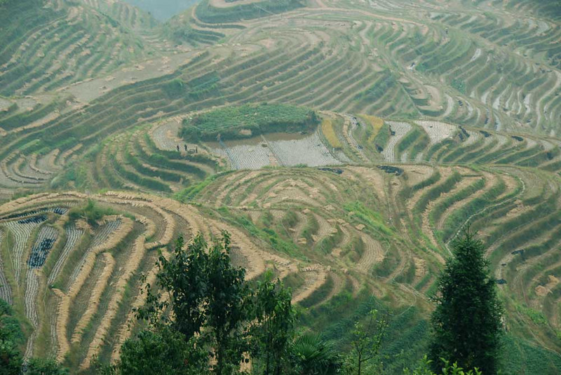 The day before the Sierra Club trip started, I checked out the spectacular Longji (Dragon's Backbone) rice terraces about 2 hours drive from Guilin.