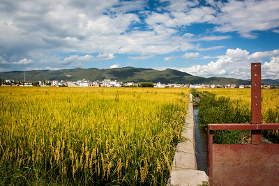 Fields outside of Dali, China