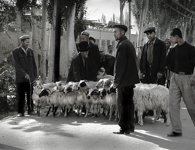 Uyghur farmers bringing their sheep to market at the Sunday Bazaar, Kashgar, China, 2005.