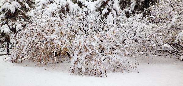 First Snow in Beijing, 2009