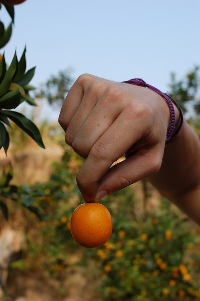 Yann holds up a perfect baby orange