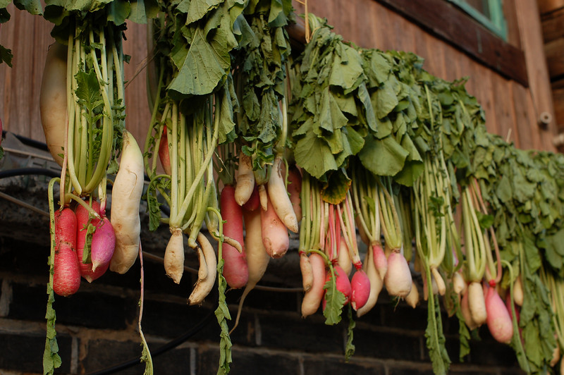 Radishes hang to dry