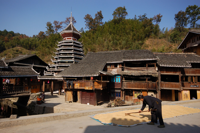 Raking rice by the drum tower