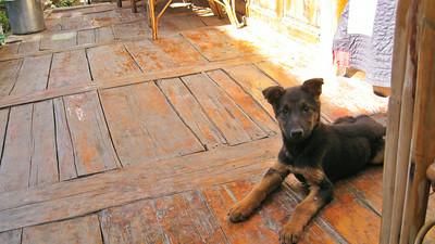 Puppy--Jiantang Town, China