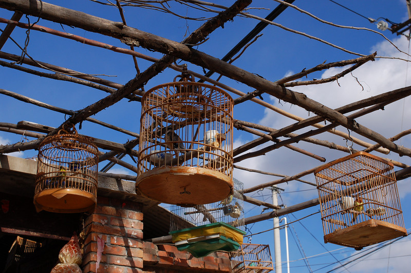 Bird cages hang in a village home
