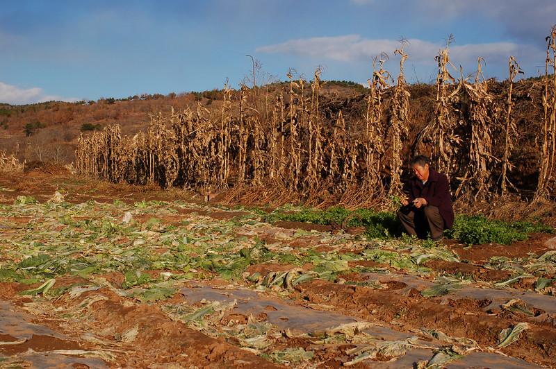 Farms outside the Pule Temple