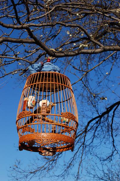Pet bird enjoys an afternoon at the Mountain Resort