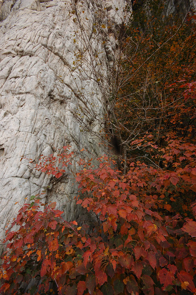 Autumn at Song Mountain