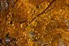 The Autumn colours of Shaolin