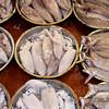 Trays of Fresh Squid