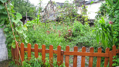 Garden--Hongcun Village, China