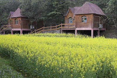Huang Shan Flowers