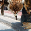 "Animal pelts hanging outside an ""old street"" shop"