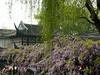 Liu Yuan (the Lingering Garden) 留園