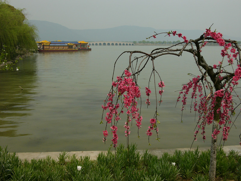 Peony Garden, Shanghu 尚湖牡丹園