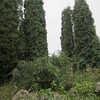 Trees at the Little Stone Forest, Xishan.