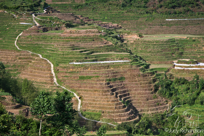 The uneven stone stairs wind their way among the rice terraces. This was our way down to Ping'An for the night.