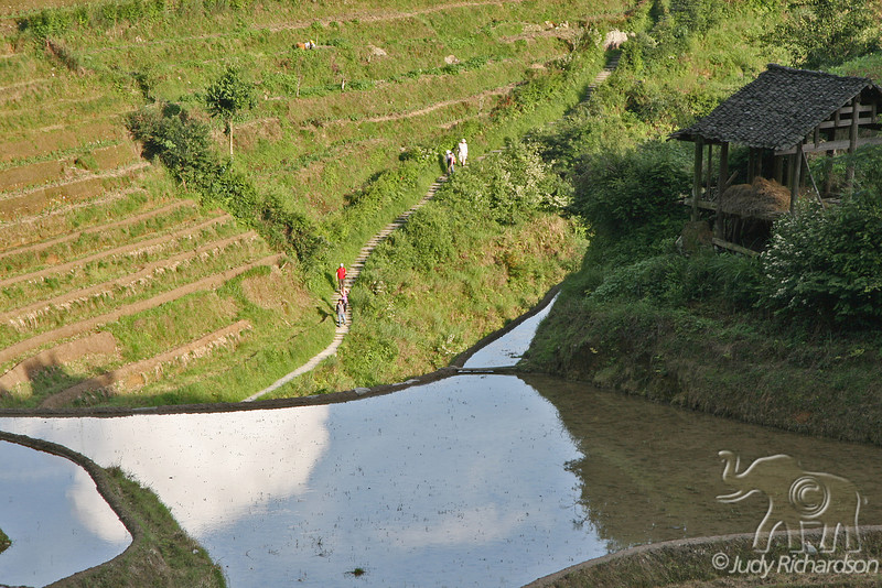 People walking along stone stairs with the reflection of the sky in the rice terrace above
