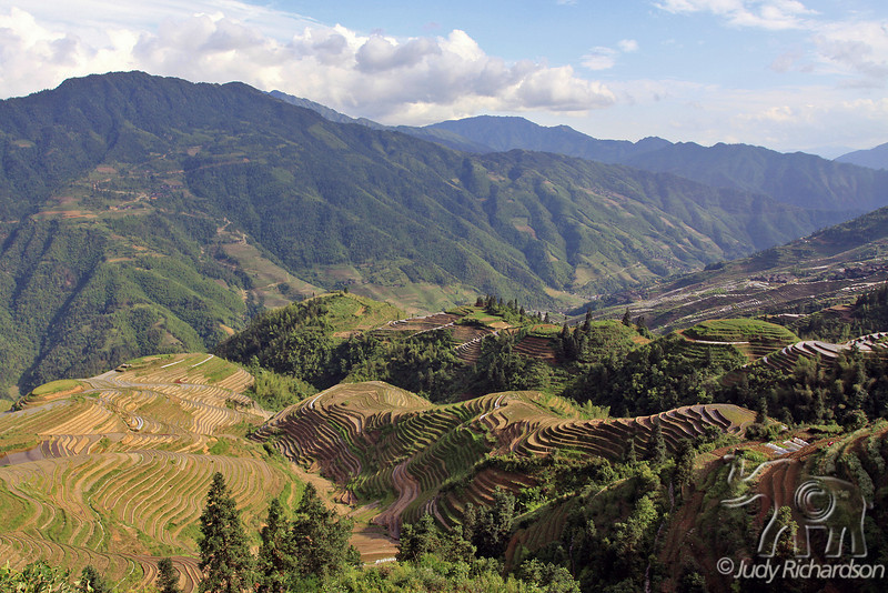 Longji Rice Fields, mountains and valley