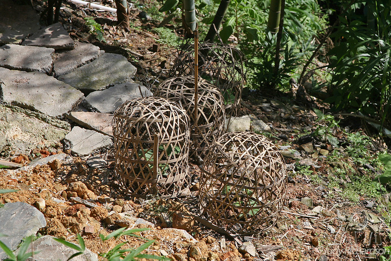Baskets protecting plantings