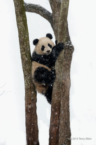 Up a tree in the snow