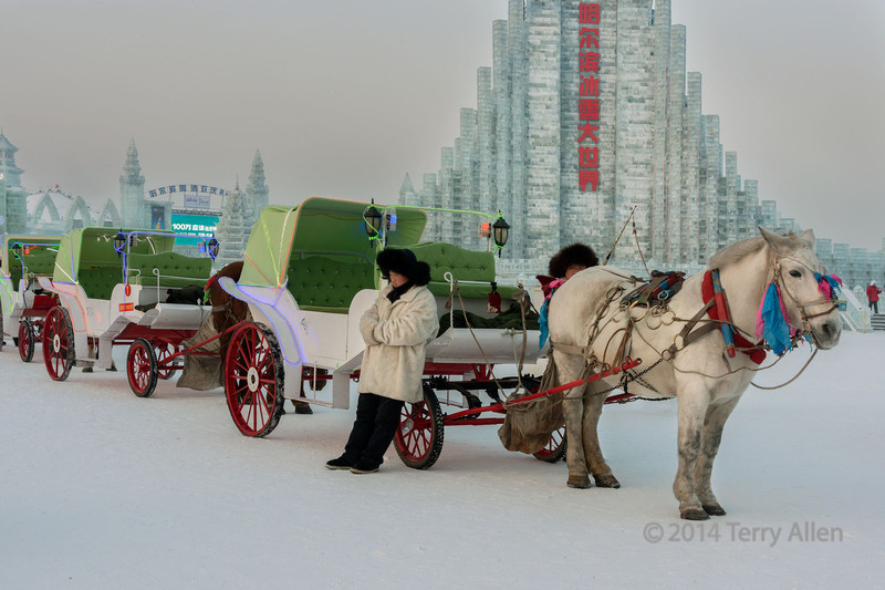 Horse drawn carts waiting for customers at the ice festival