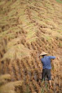 Rice Farmer, Yang Shuo, China