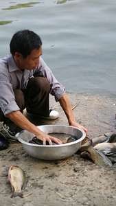 Cleaning Fish, Yang Shuo, China