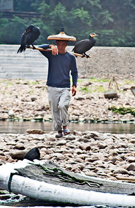Chinese fisherman with his cormorant birds