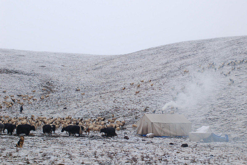 Crossing nomads on a pass separating Gansu and Qinghai provinces