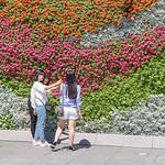 Selfies Against the Flower Wall