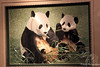 2 Panda embroidery picture