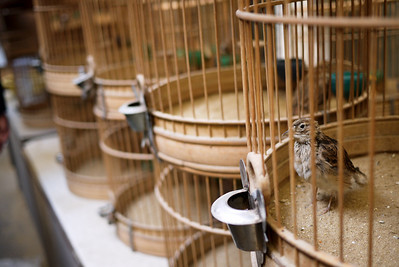 Caged birds for sale in Shanghai, China