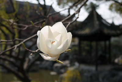 Flowers in bloom at the Yuyuan Garden in Shanghai, China