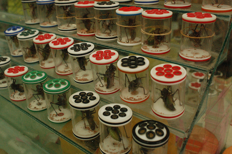Big crickets for sale