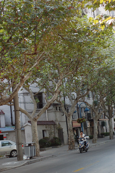Tree-line streets of French concession