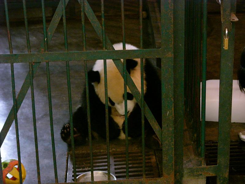 成都熊猫保护中心