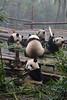 Sichuan201312-008