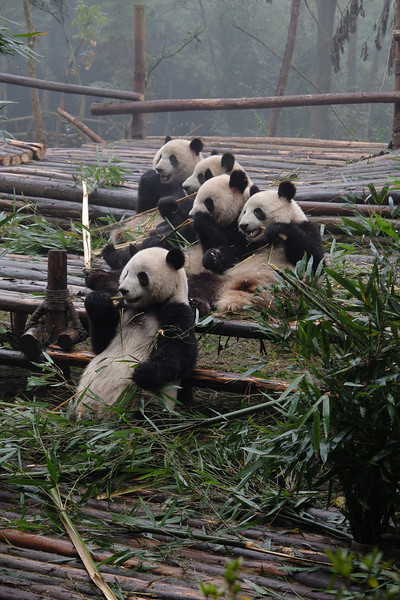 Sichuan201312-007