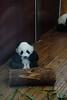 Sichuan201312-014