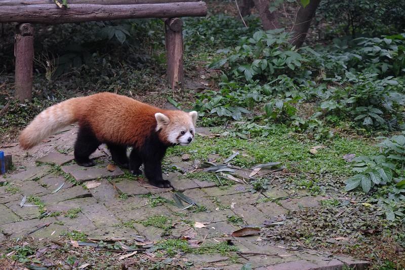 Sichuan201312-010