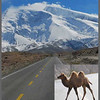 "The Karakoram Highway is definitely one of the world's most spectacular roads, but watch out for camels crossing the road.  This is Mustagh Ata (Uygher for ""father of glaciers""), elevation 7,546 m or 24,756 feet.  It is the easiest of the 7,000 meter peaks to approach and climb: just get out of your car a few miles further down the road and walk up the right-hand skyline until you're on top (in maybe two weeks)."