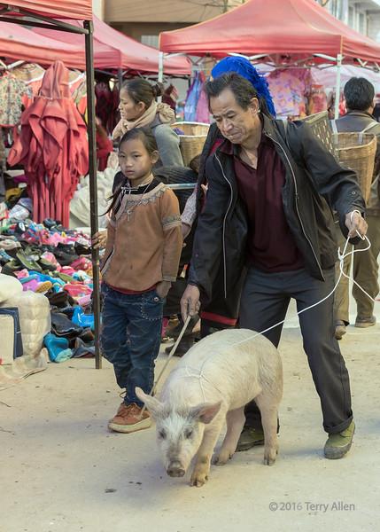 This-little-piggy-went-to-market,-Shengcun,-Yuanyang,-Yunnan-Province,-China