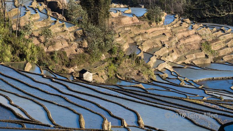 Rice-terraces-in-the-sun,-Quanfuzhaung,-Yuanyang,-Yunnan-Province,-China