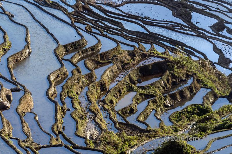 Rice-terraces-convolutions,-early-morning,-Duoyishu,-Yuanyang,-Yunnan,-China
