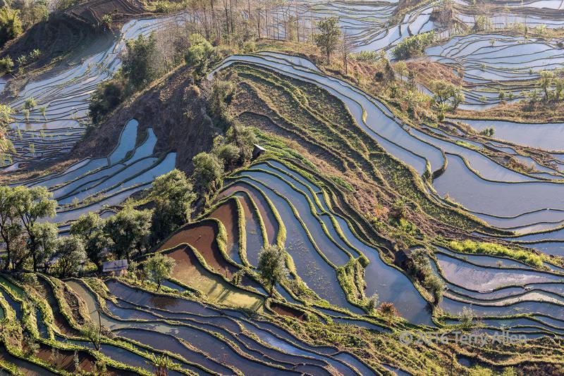 Rice-terraces-catching-the-late-day-light,-Niujiaozhai,-Yunnan-Province,-China