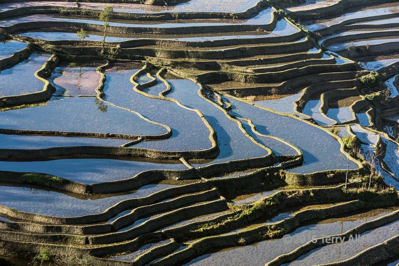 Serpentine-lines,-light-and-shadows,-Duoyishu-Rice-Terraces,-Yangyang,-Yunnan,-China