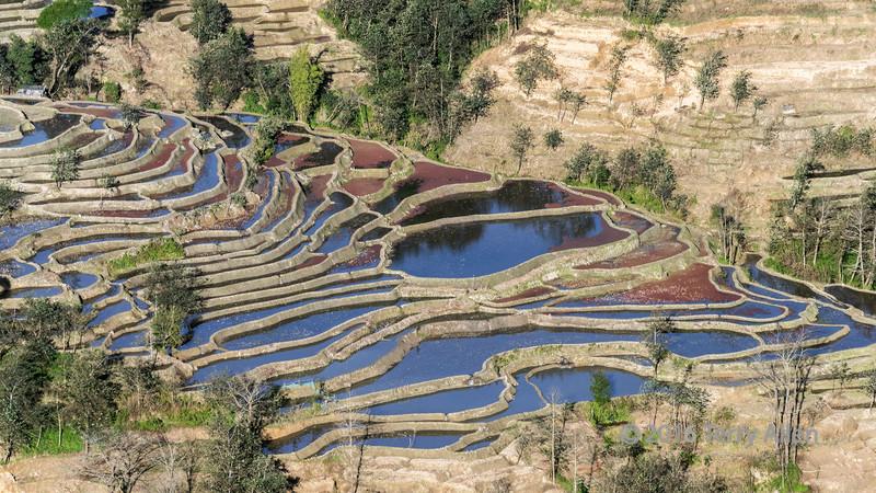 Rice-terraces-with-red-algae-and-blue-sky,-Bada,-Yuanyang,-Yunnan-Province,-China
